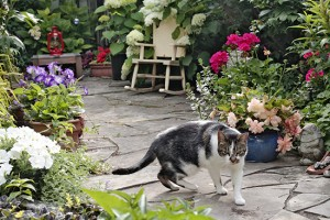 Elizabeth Bowes' Beach garden features a variety of flowers for her cool cat Miles. PHOTO: Andrew Hudson